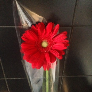 Flower from a lovely friend